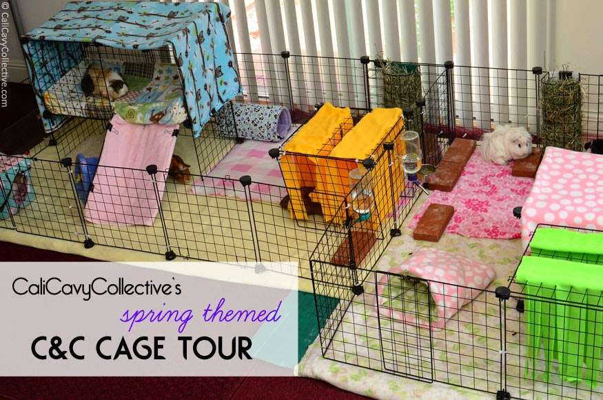Blog about all things guinea pig guinea pig 101 fleece bedding