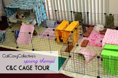 guineapig C and C fleece cage tour