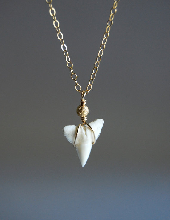 studies shark tooth jewelry