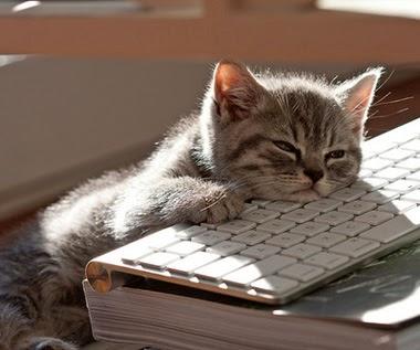 kucing tidur gak penting