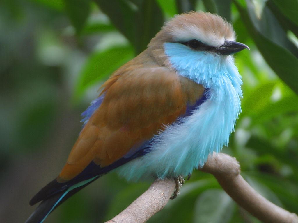 worldimage4u: Colorful and different types of Birds for bird lovers