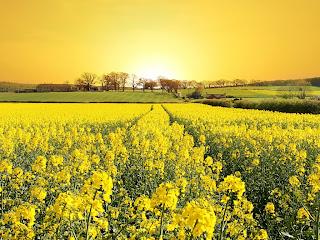el doradol del sol en las flores