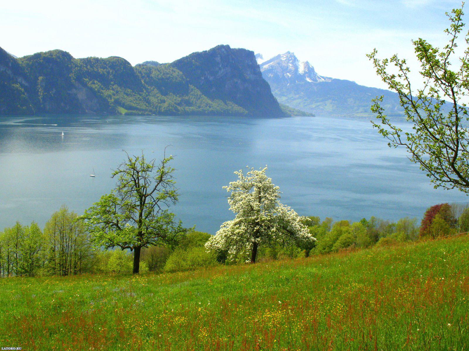 http://1.bp.blogspot.com/-MKsajJThtN8/T8xjKoOL6oI/AAAAAAAABeA/XkgtrsFWnDU/s1600/Desktop-wallpapers-free-Spring-in-Switzerland.jpg