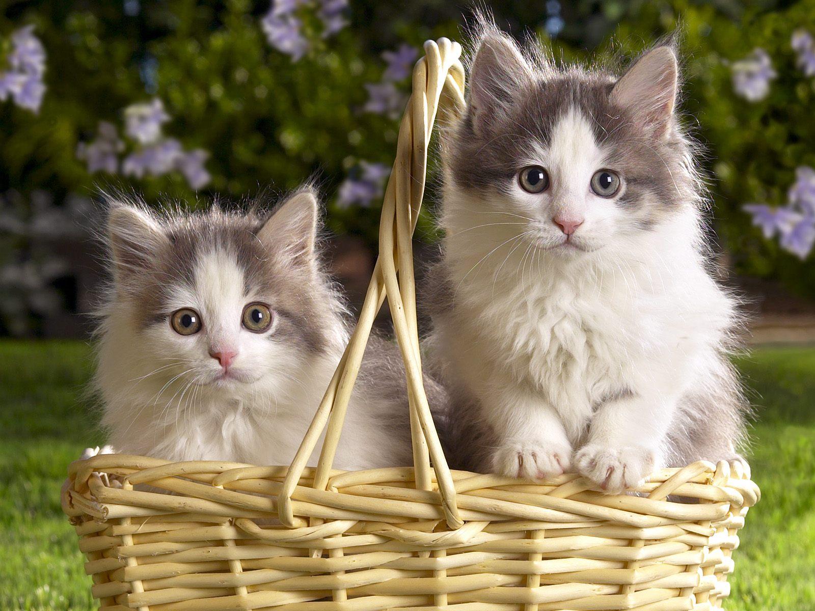 http://1.bp.blogspot.com/-MKwnfpu6ntg/TZX0ORiwEuI/AAAAAAAAAvI/0vH-8iEtqK0/s1600/kittens+1.jpg