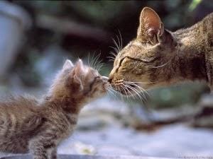 Kasih sayang kucing kepada anaknya