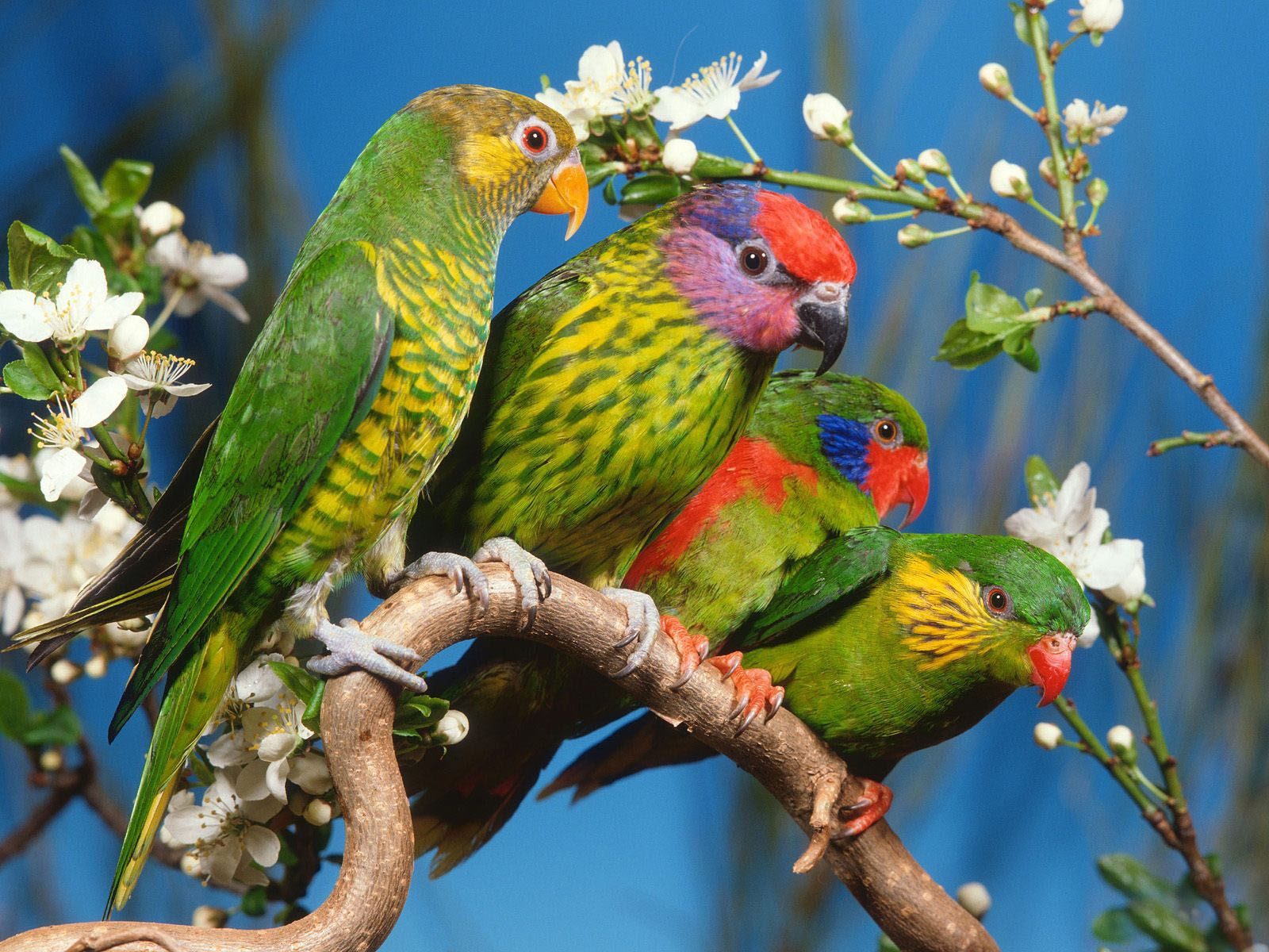 Animals Of Planet Earth Birds