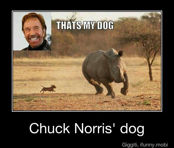 Funny Dog Breeds Jokes
