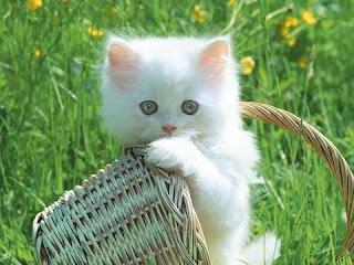 Gambar Gambar Kucing