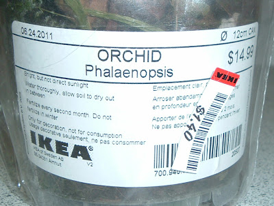 [Photo: label of Phalaenopsis from IKEA. Price marked down from $14.99 to $1.40.]
