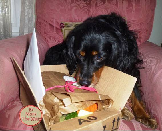 Molly The Wally Has A Package From Freya at Soggibottom 4!