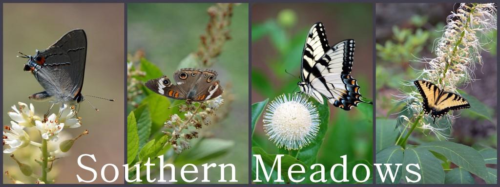 Southern Meadows