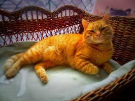 Fefe,il gatto più simpatico che c'è!