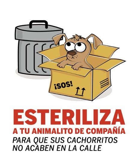campaña municipal gratuita de esterilización