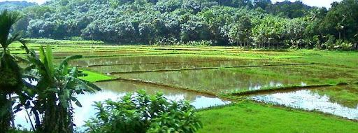 പ്രവാസി-    ബഷീര് ജീലാനി