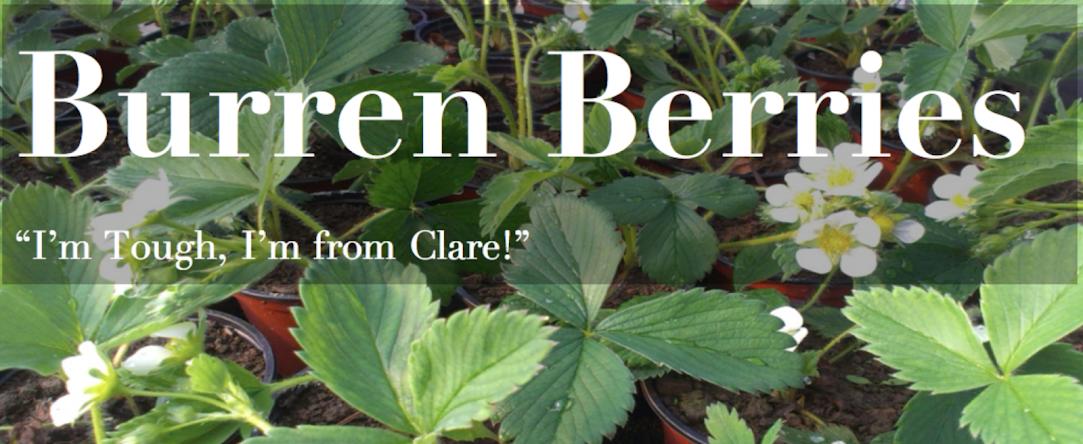 Burren Berries