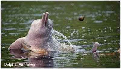 Dolphin Air Tawar