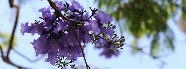 Imagem de flores lilás com fundo claro