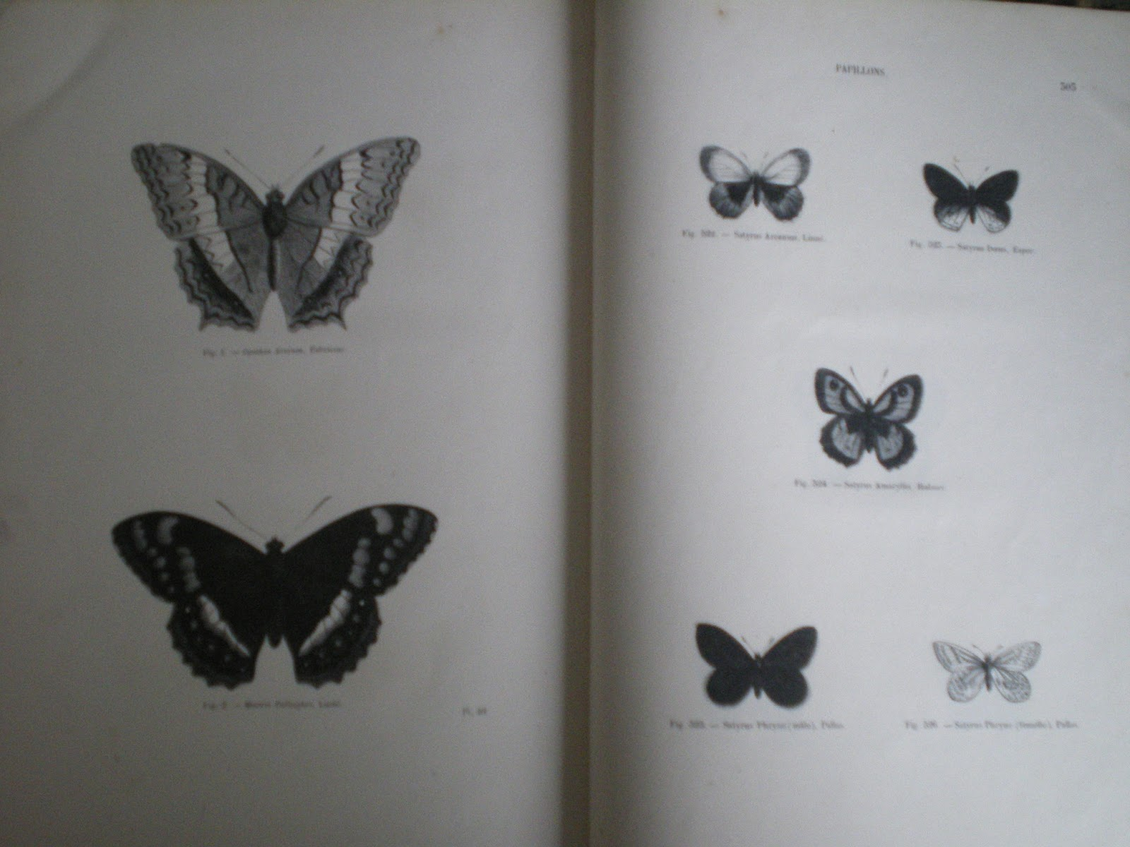 librairie ancienne florence velk lorient docteur chenu m h lucas encyclop die d. Black Bedroom Furniture Sets. Home Design Ideas