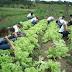 Cidades com baixo IDH receberão kits do governo para agricutura familiar