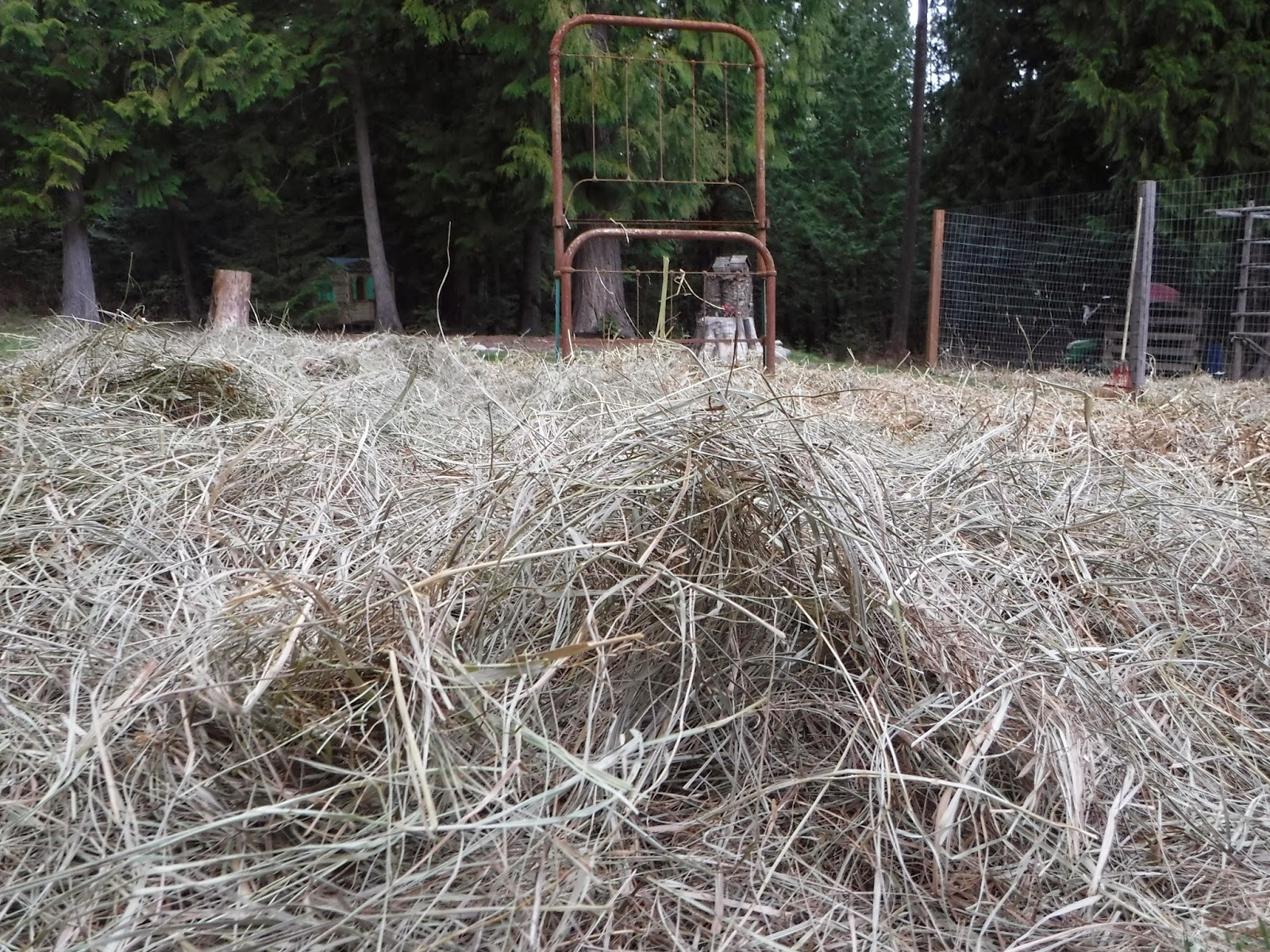 Deep Mulching the garden with old hay