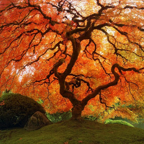 Autumn SDA