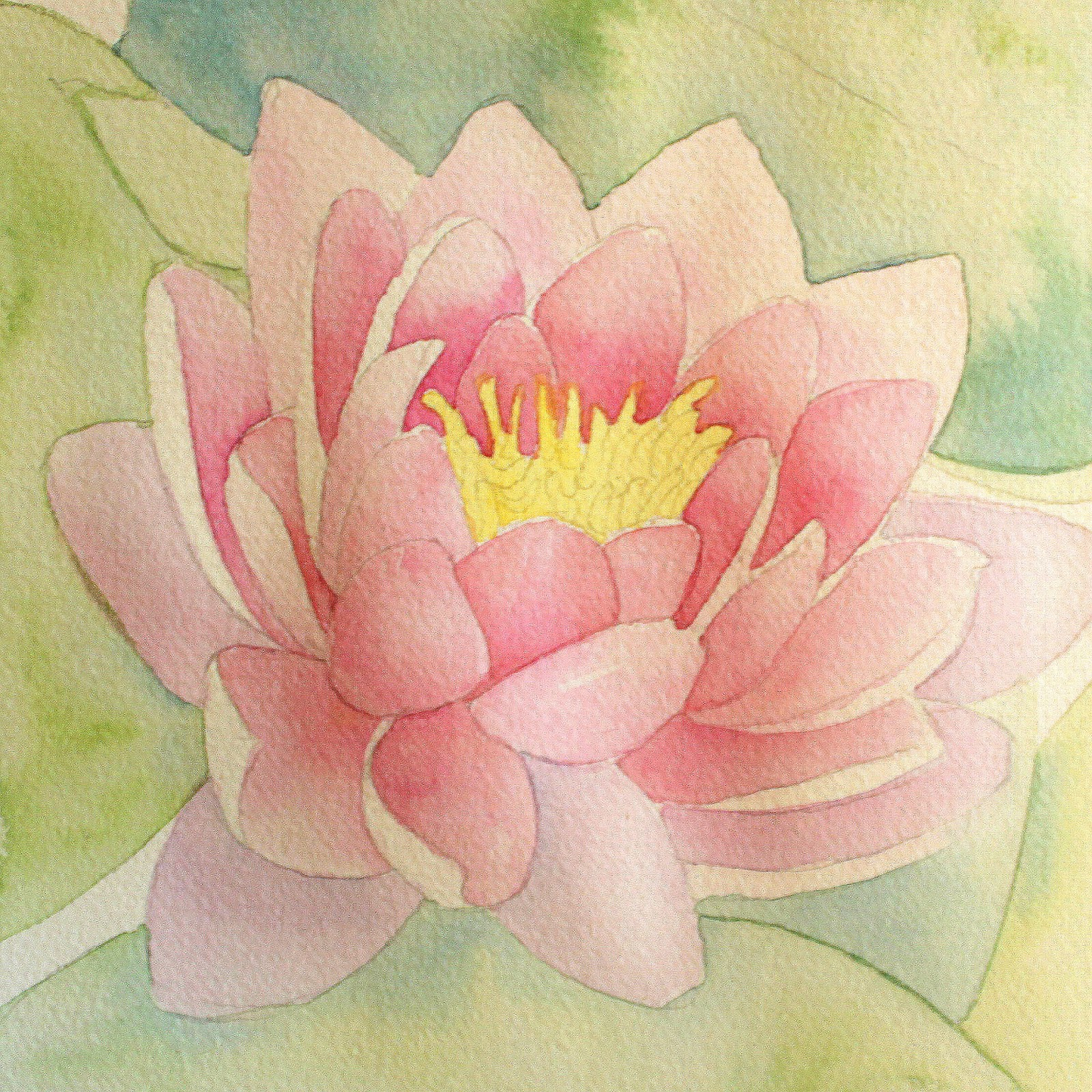 Life With Mg The Lotus Flower Within