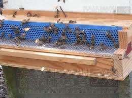 Raja Madu Madu Raja memanen Bee Pollen