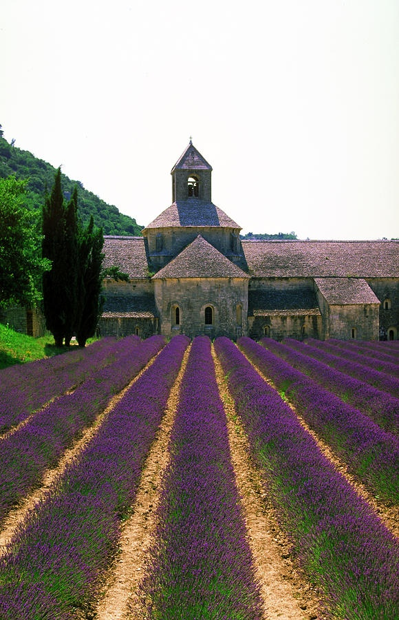 Lavender Field,France