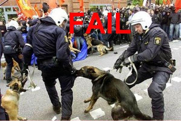 grappige foto: politiehond bijt politieagent