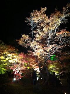 Japan, Matsushima, Autumn, Fall, 松島, 紅葉