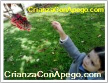 Un año sin cole en www.crianzaconapego.com