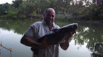 American channel catfish around 6kg