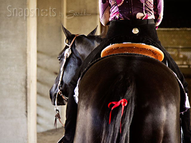 Equine Tips Horse Training Care What Does A Red Ribbon Tied In