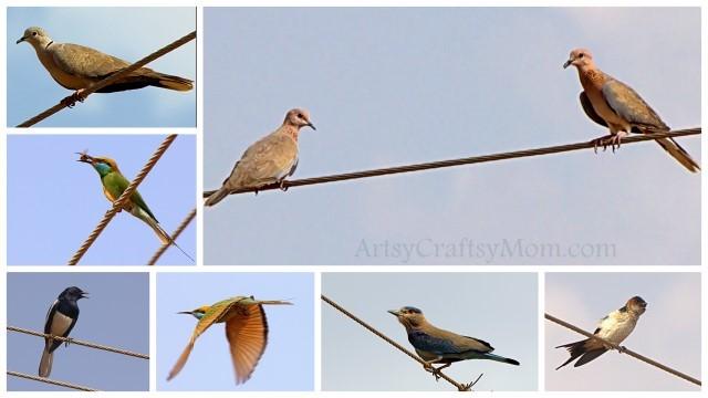 kaggaladu birds