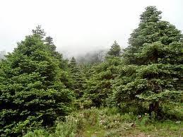Pinsapar - Sierra de las Nieves