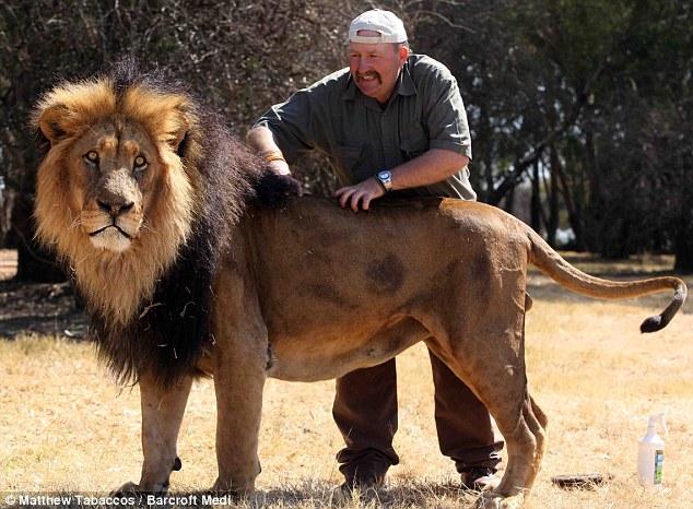 Kerja merawat kecantikan singa