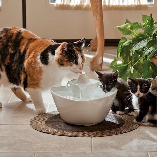 Healthiana Как защитить свою кошку от обезвоживания