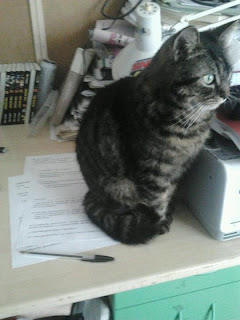 cat loves to sit on papers