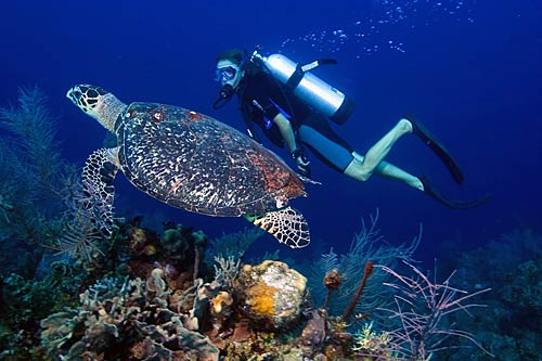 Barrier zipper galleries belize barrier reef - Best place to dive the great barrier reef ...