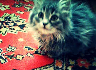 Кошка сидящая на ковре