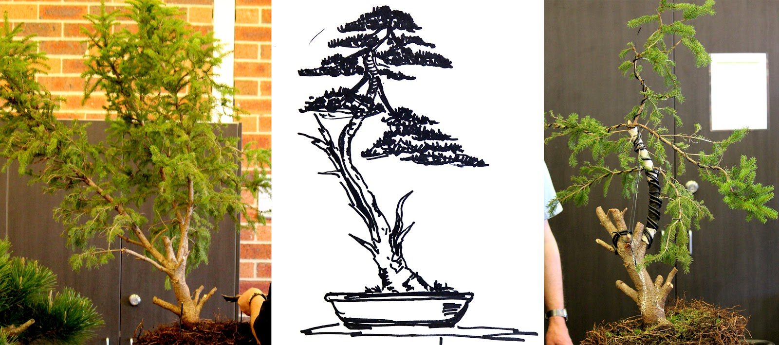 Kigawa39s Bonsai Blog Demonstration By Marc Nelanders