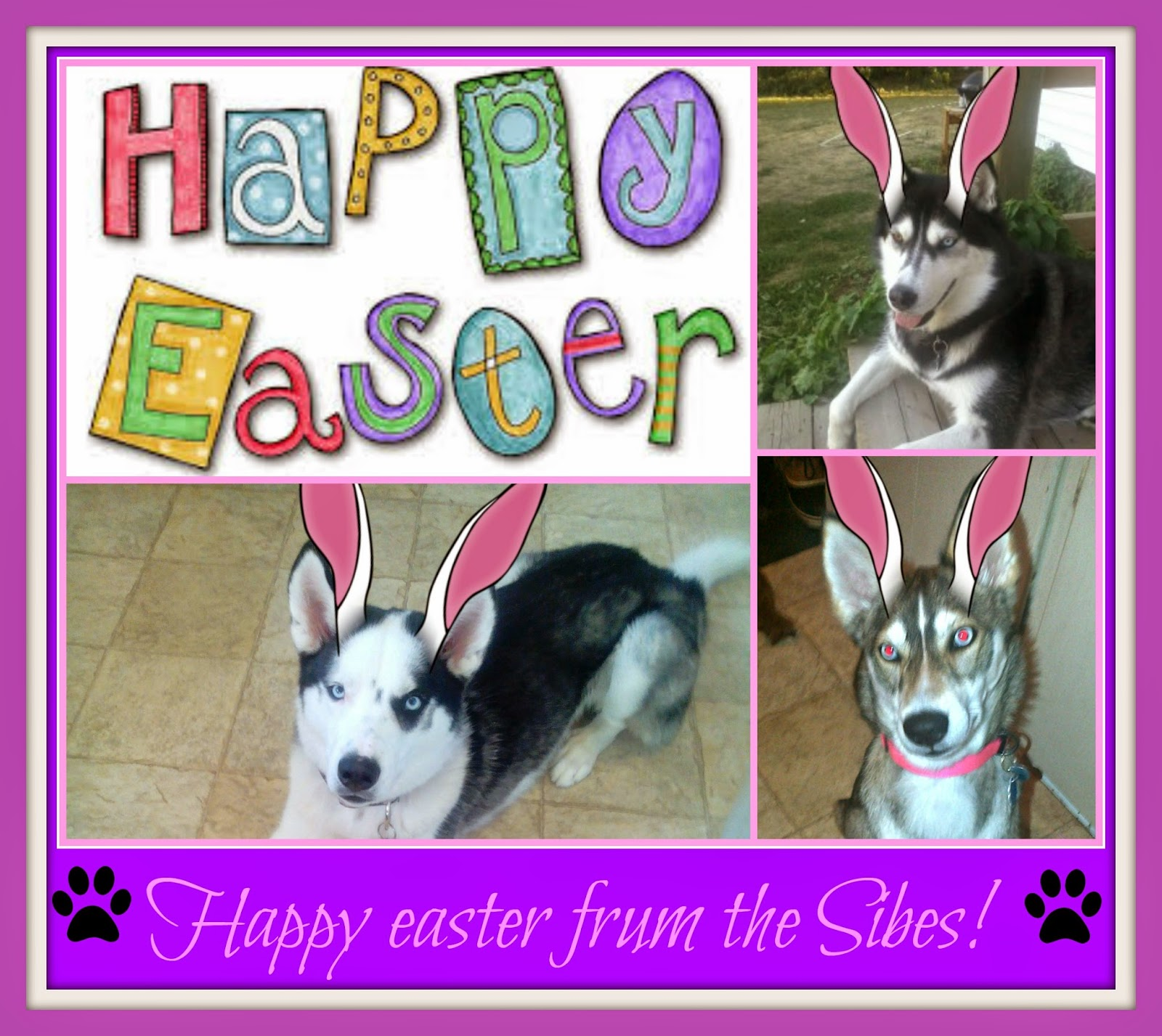 happy easter huskies