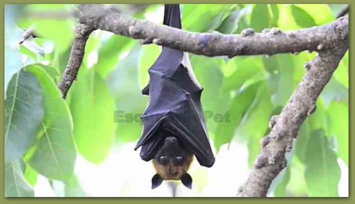 Resultado de imagem para morcegos