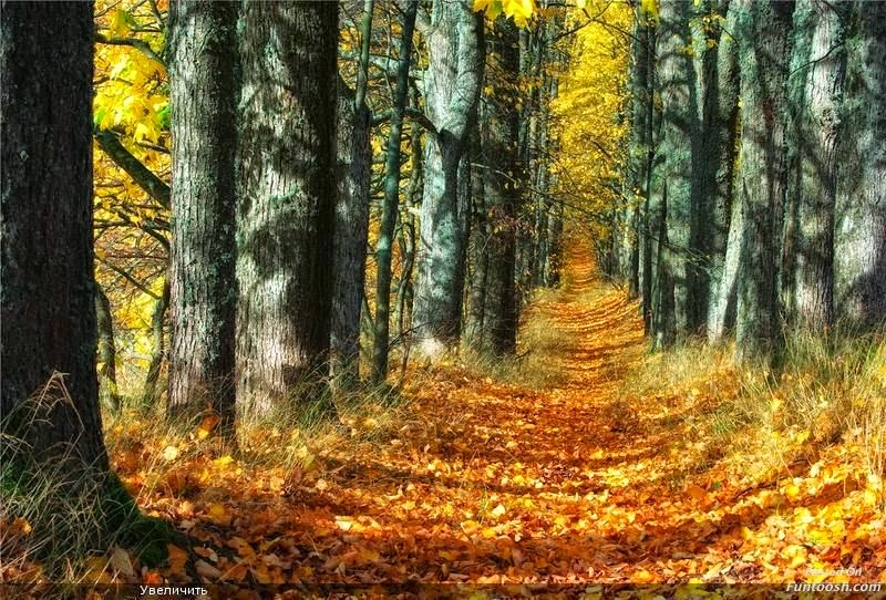 information of autumn season Here are five surprising facts about the autumn equinox,  from wolf and sturgeon to hunter and harvest, full moons are named for the month or season in which they rise the harvest moon is the .