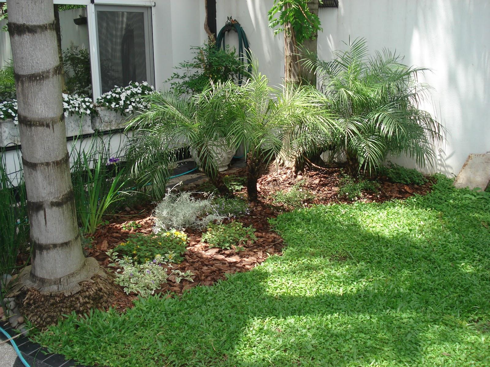 Reverdir jardineria y paisajismo jard n en la media for Jardines con palmeras