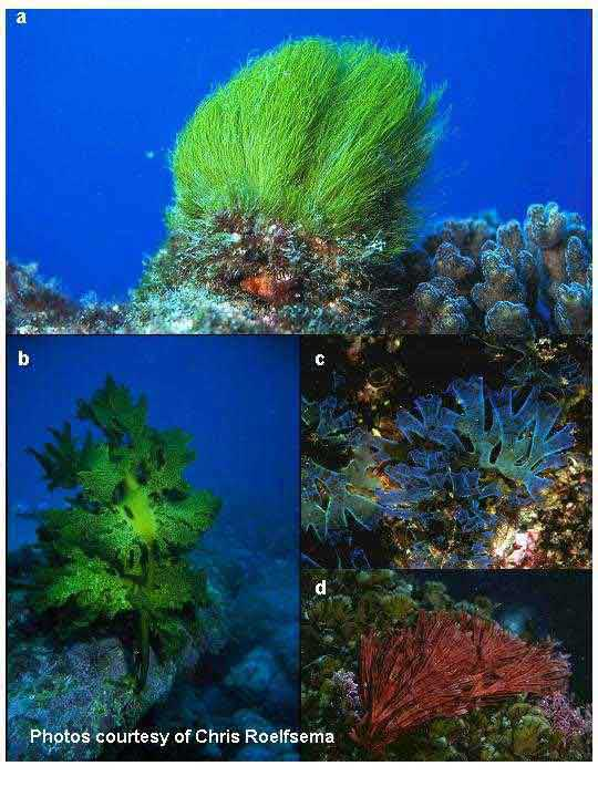 Differences in Terrestrial and Aquatic Plants