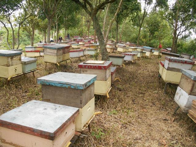 jual madu asli di purwokerto grosir madu murni di
