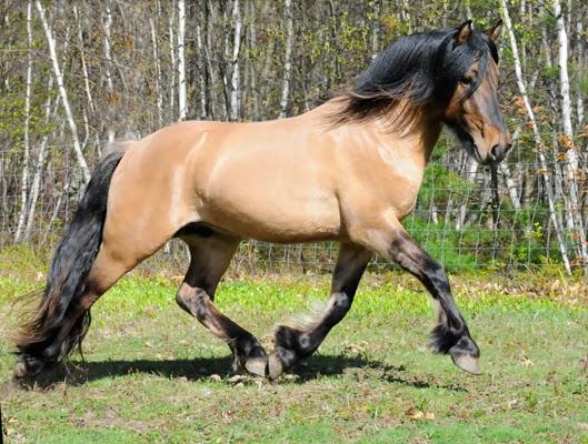 146 Horse Breeds  Cowboy Frank