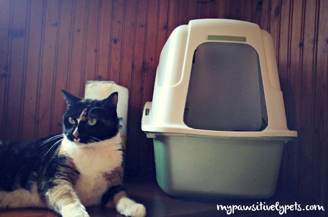 Healthy Cat Stopped Using Litter Box
