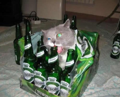 drunken cat on computer